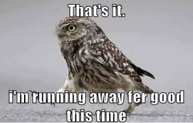 FunniestMemes.com - Funniest Memes - [That's It. I'm Running Away ... via Relatably.com