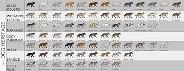 Complete Canine Colors And Coat Patterns Soulsrpg Com