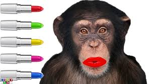 learn colors with monkey doing lipstick makeup finger family song nursery rhyme