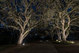 landscape lighting trees. landscape lighting large trees s