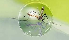 Mosquito Control — Microbide
