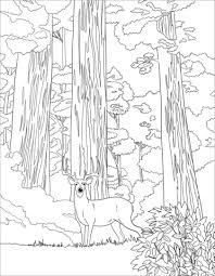 Sequoia National Park Kleurplaat Gratis Kleurplaten Printen