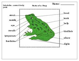 Parts Of A Frog Label Parts Of An Amphibian Frog By Green Tree Montessori Materials