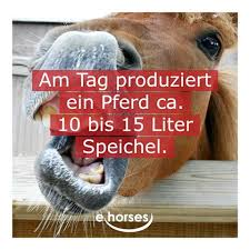 Horsefact Instagram Photos And Videos Inst4gramcom