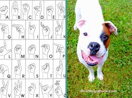 Dog Training Hand Signals Chart Pdf Dog Training Commands Hand Signals Cat And Dog Lovers