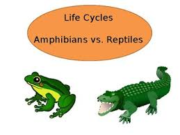 Difference Between Amphibians And Reptiles Venn Diagram Amphibian Vs Reptile Worksheets Teaching Resources Tpt