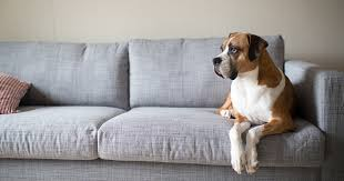 Keep dogs off furniture Dogtime