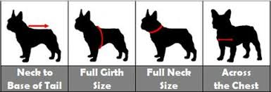 Dog Apparel And Clothes Plus Size Pups