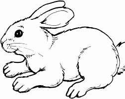 Image Colorier Lapin