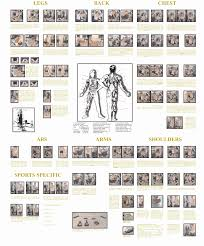 Exercise Wall Chart Free Download Exercise Online Charts Collection