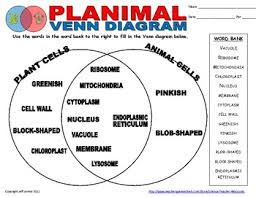 Venn Diagram Plants Plant Cell Venn Diagram Under Fontanacountryinn Com