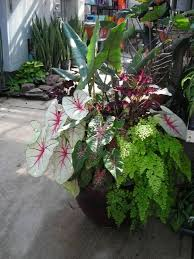 342 Best Shade Container Gardening Images On Pinterest  Potted Container Garden Shade Plants