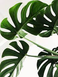 Minimalist Plant Wallpapers on WallpaperDog