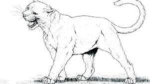 free mountain lion coloring pages mountain lion coloring pages mountain lion coloring pages free mountain lion