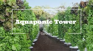 aquaponic gardening. vertical garden aquaponic gardening