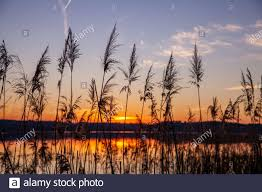 lake with reed Silhouette at Colorful ...