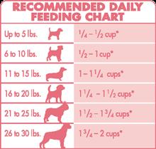 Small Dog Feeding Schedule Goldenacresdogs Com