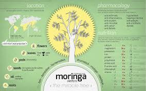 Moringa Chart 2 Yah Rootz