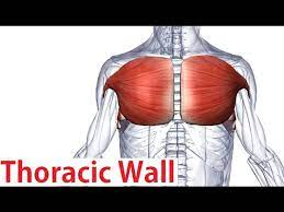 Chest wall pain is caused by problems affecting the muscles, bones and/or nerves of the chest wall. Muscles Of The Thoracic Wall Chest Muscles Anatomy Youtube