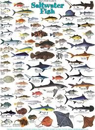 South Carolina Saltwater Fish Species Chart North Coast Fish Identification Guide North Free Download