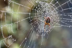 Spiders Are Your Friends The Seattle Times