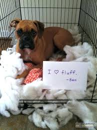 boxer dog bed dog bed 5 enough said this is precious a we have been there boxer dog bed