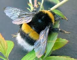 vidéos sur les abeilles  Images?q=tbn:ANd9GcQwkPrsHRR1KMGIs3Qla93wyFD7Ot7RvpEo8LC-genol6XtM8nD