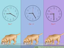 Puppy House Training Chart How To Potty Train A Puppy In An Apartment 10 Steps