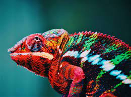 Chameleon 4K wallpapers for your ...