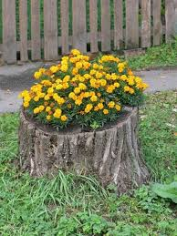 Recycling tree stumps for yard decorations with flowers Creative ideas for  decorating with flowers