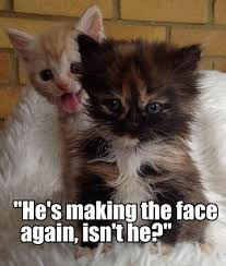 cute kittens and puppies quotes. Cute Kittens Quotes And Puppies Kindofpets