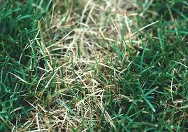 Dollar Spot Disease Of Foliage Greencast