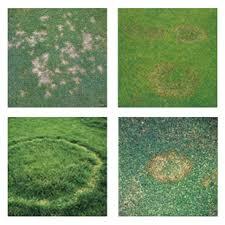 Turf Diseases Bayer Environmental Science Uk Ireland