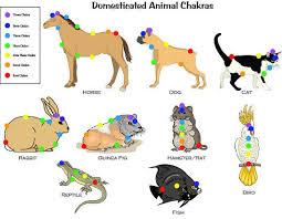 Animal Chakra Chart Printable 7 Chakra Animal Pet Chart For Reiki Hand Positions
