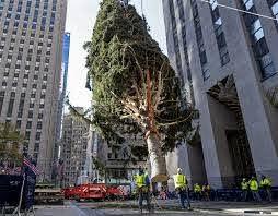 Rockefeller Center Christmas tree goes ...