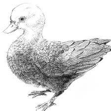 らくがき鳥のらくがき3種 Interemit Design