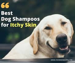 Best Dog Shampoos for Itchy Skin & Hot Spots [2018]