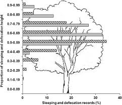 Patterns of Sleeping Site and <b>Sleeping Tree</b> Selection by Black-and ...