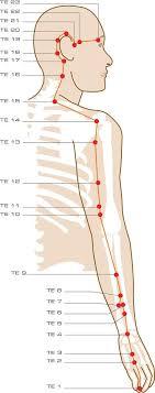 143 Best Acupoints Healing Images Acupressure Massage