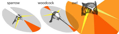 Binocular Vision In Pterosaurs The Pterosaur Heresies