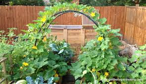 Small Picture Small Vegetable Garden Design for Small House Making Guide