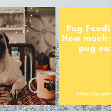 Canidae Dog Food Feeding Chart Best Food For Pugs Detailed Review And Buyers Guide Pug