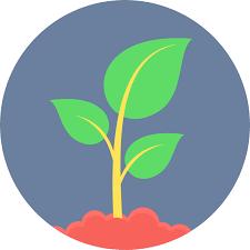 hoja fotosíntesis