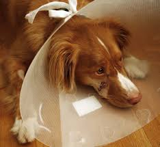 simple first aid to treat your dog s cuts and small wounds at home