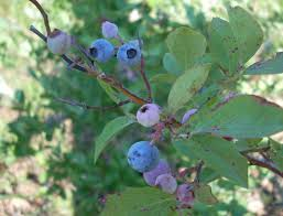 Popular Fruit Tree FreshBuy Cheap Fruit Tree Fresh Lots From Non Gmo Fruit Trees For Sale