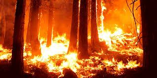 Αποτέλεσμα εικόνας για πυρκαγιες ελλαδα