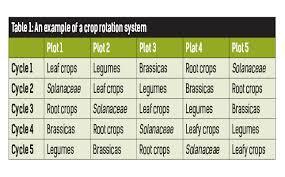 Crop Rotation Chart Understanding Crop Rotation