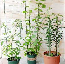 Garden Tomato Support Cage  Climbing Plant Trellis  Buy Climbing Climbing Plant Trellis
