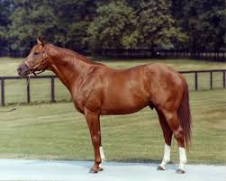 Horse Speed Index Chart Secretariat Horse Wikipedia