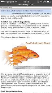 Goldfish Feeding Chart Please Critique My Goldfish Care Mumsnet